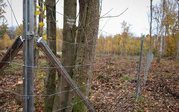 teko waldspende 800x500 1 600x375 - TEKO donates a new forest