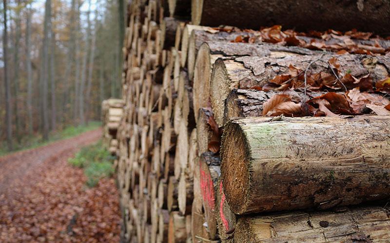 teko waldspende 800x500 2 - TEKO donates a new forest
